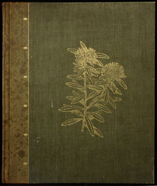 The Art Album of New Zealand Flora - Being a Systematic and Popular Description of the Native Flowering Plants of New Zealand and the Adjacent Islands Volume I