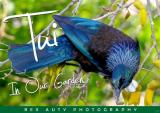 Tui in Our Garden