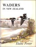 Waders in New Zealand